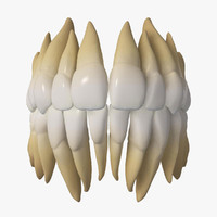 human teeth 3d max