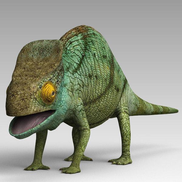 Chameleon_02.jpg