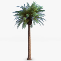 palm tree 3d models