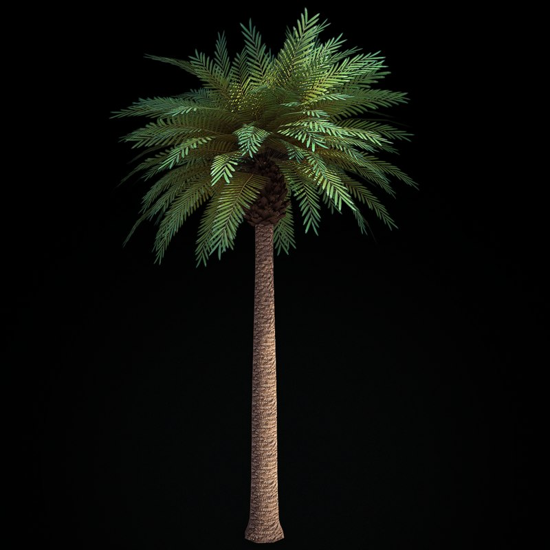 Palm_sign_001b.png