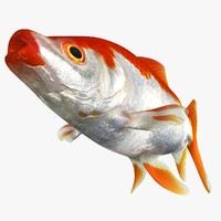 common goldfish animation fbx