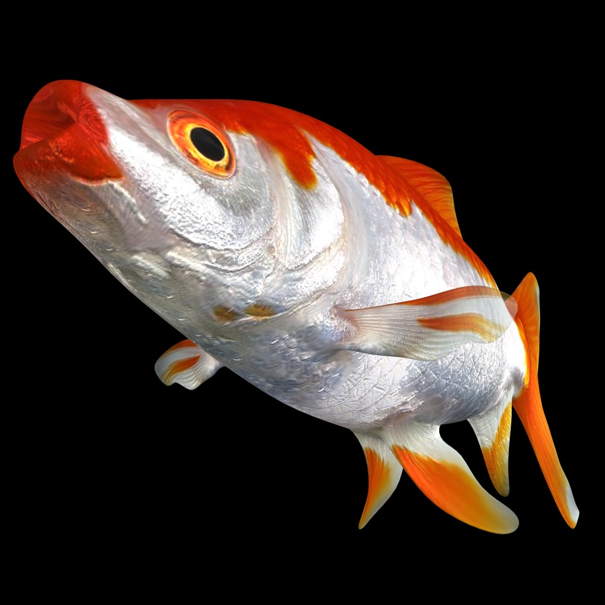 Common-Goldfish_Rigged_Rr_02-a.jpg