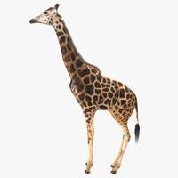 realistic giraffe 3d model
