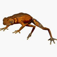 3d brown tree frog model