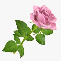 rose 6 3d model