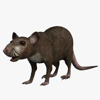 maya rat