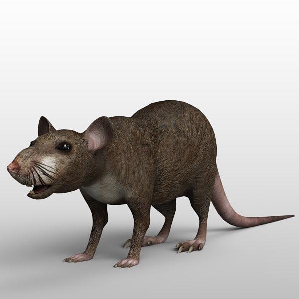 Rat_02.jpg