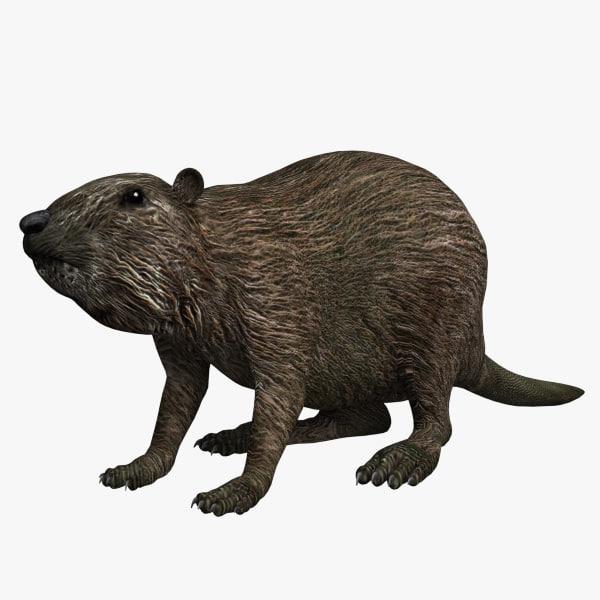beavers_01.jpg