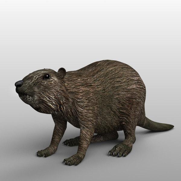 beavers_02.jpg