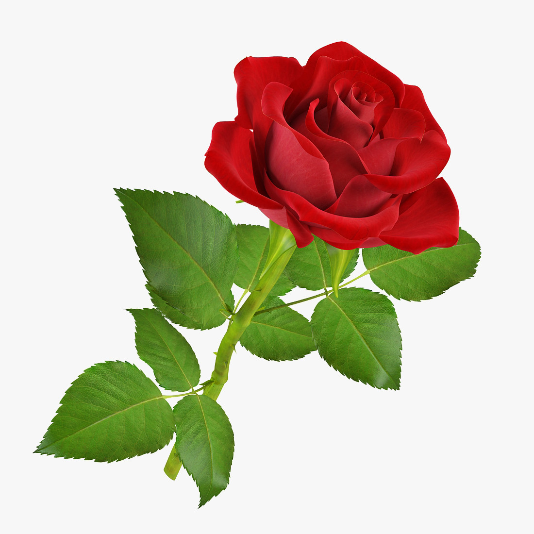 pr_rose5_1_1.jpg