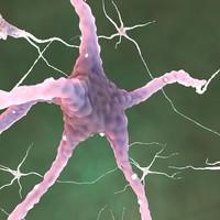neurons glial cells c4d