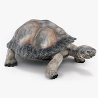tortoise turtle 3d max