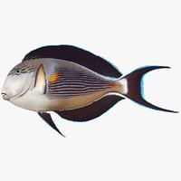 3dsmax sohal surgeonfish