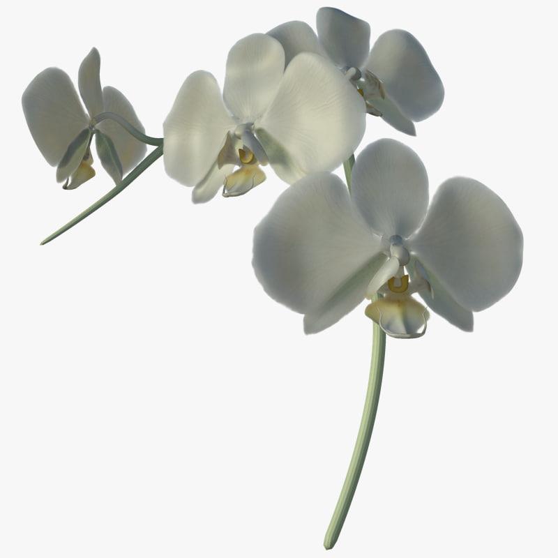 orchid_signature.jpg