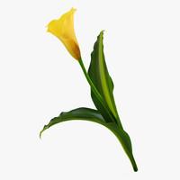 calla flower max