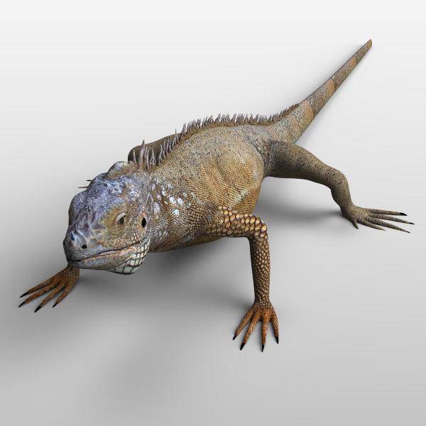 iguana_02.jpg