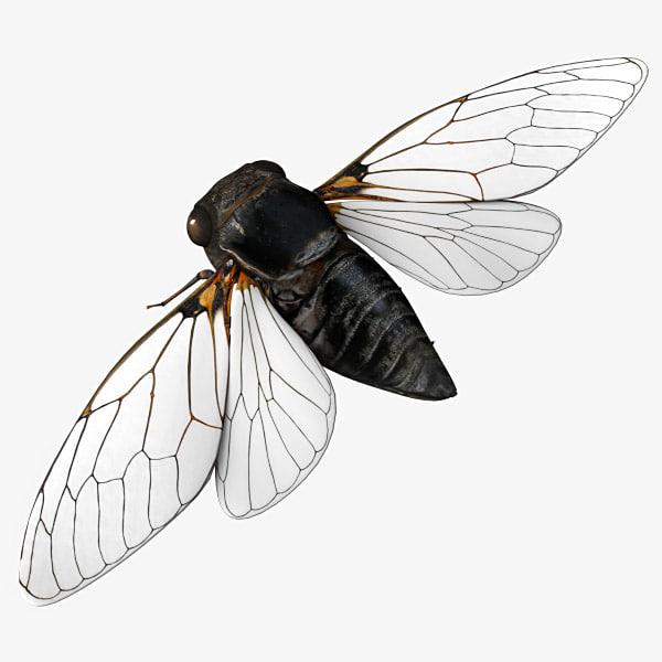 Cicada_01.jpg