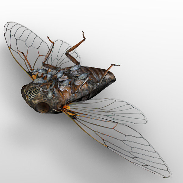 3d model cicada wing - Cicada... by 3d_wanderer