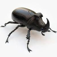 maya rhinoceros beetle