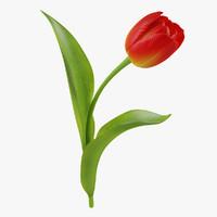 tulip flower obj
