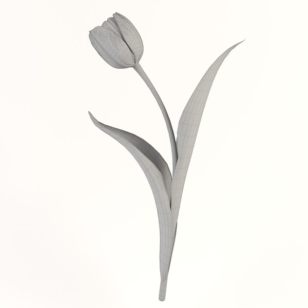 tulip flower obj - Tulip 6... by ms_Dessi
