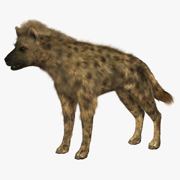 hyena_01.jpg