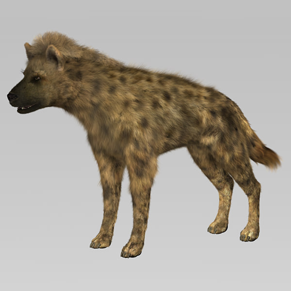 hyena_02.jpg