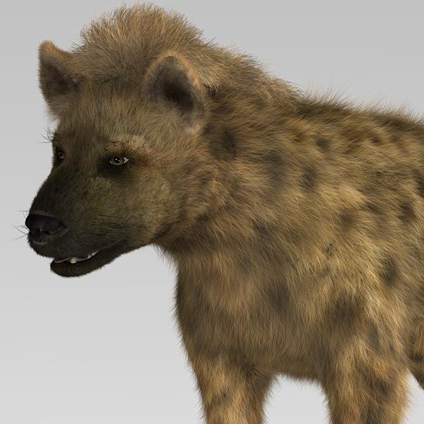 Hyena 2014 Review hyena hair 3d model