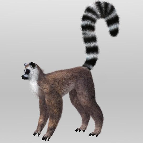 Lemur with Hair