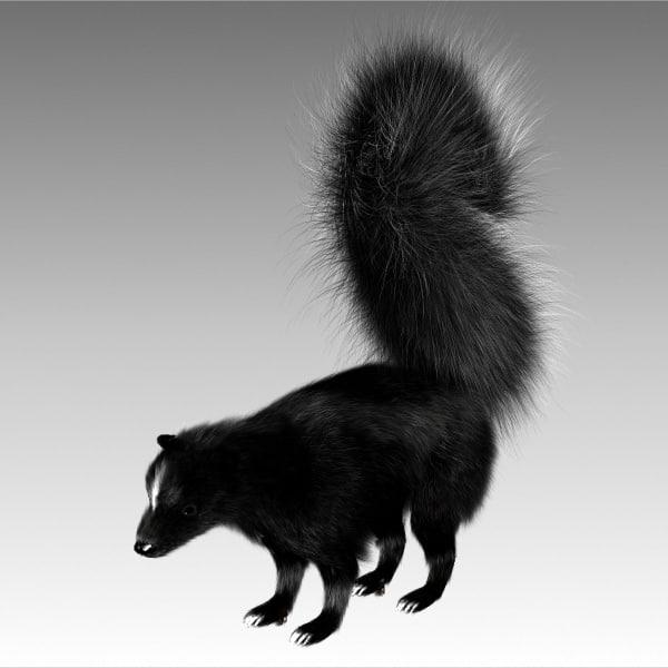 skunk1.jpg