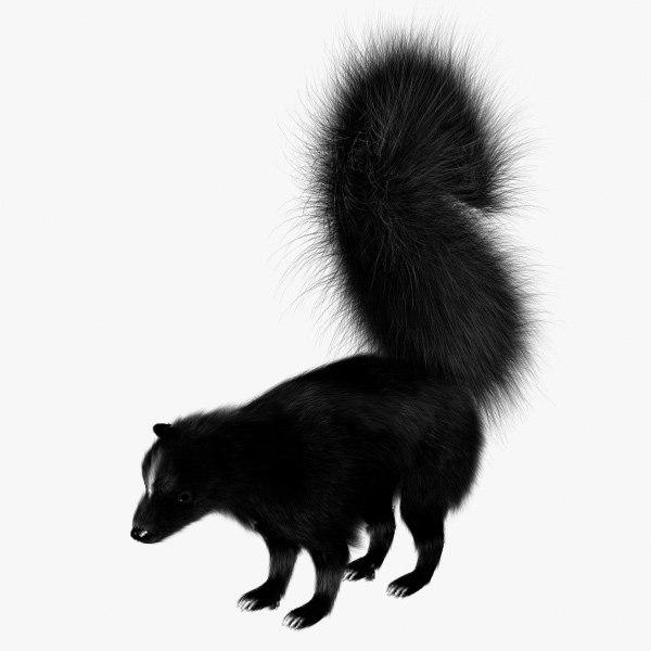 skunk1signature.jpg