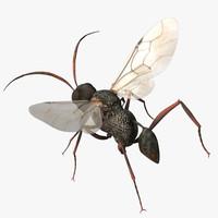 Wasp Devil