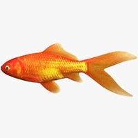 3d model goldfish scanline