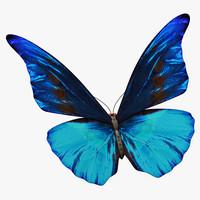 butterfly butt max