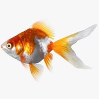 3d ryukin goldfish