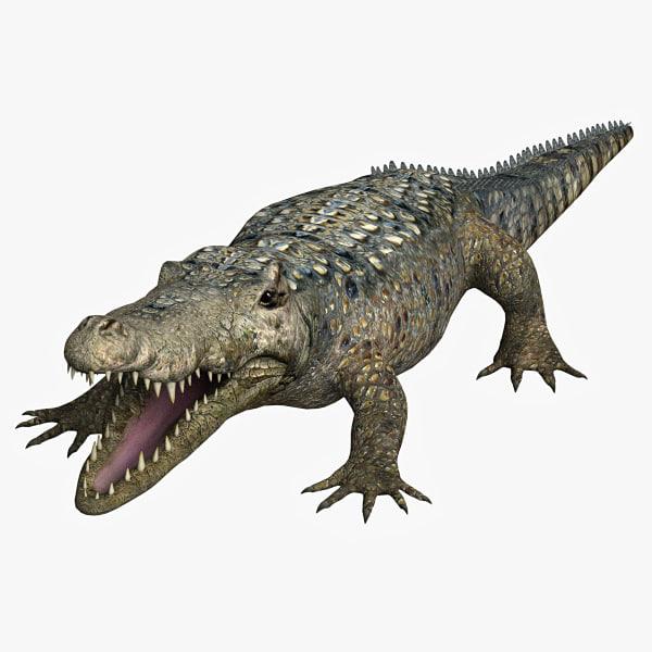 Alligator_01.jpg
