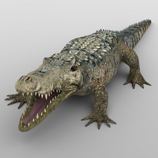 Alligator_02.jpg