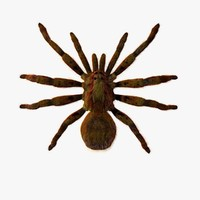 3d spider normal animation model