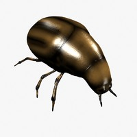 3d beetle lightwave model