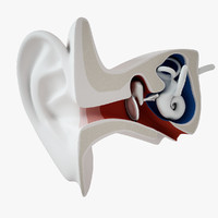 stylized ear inner 3d model