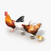 3d model chicken family