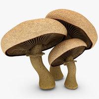 fbx portobello mushroom