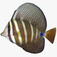 3d model of pacific sailfin tang
