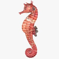 3d realistic seahorse