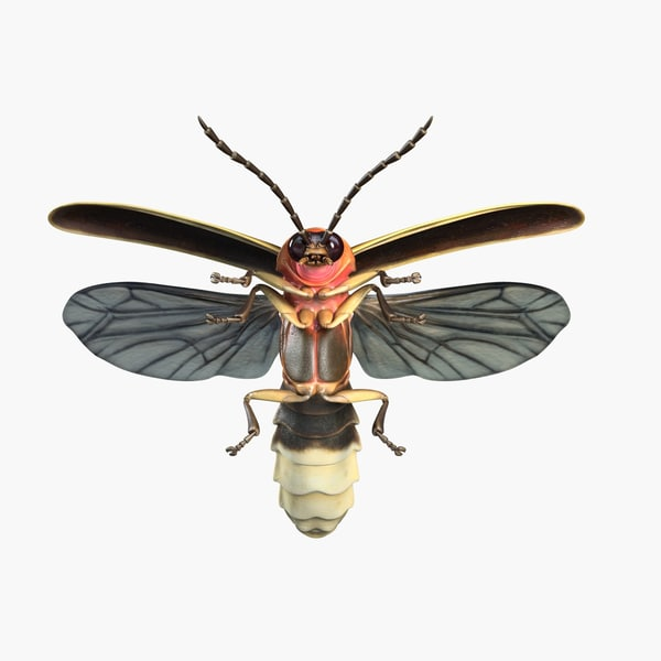 Firefly on Pinterest | Fireflies, Long Exposure and Maya