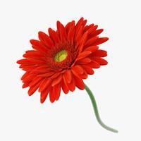 3d model flower gerbera