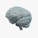 Cerebellum 3D models