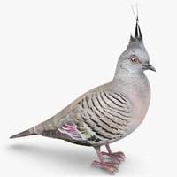 3d model of crested pigeon