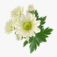 flower chrysanthemum 3d obj