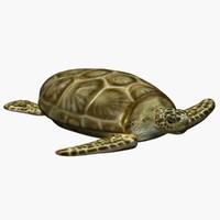 3d model turtle sea